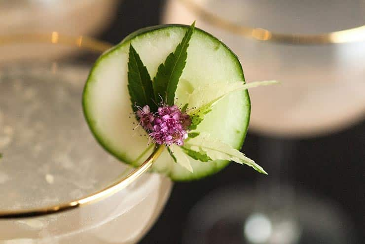 A closeup of a cucumber garnish with a small flower and green leaf on the edge of a cocktail glass.