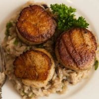 3 seared scallops on top of creamy rice, garnished with a sprig of parsley.