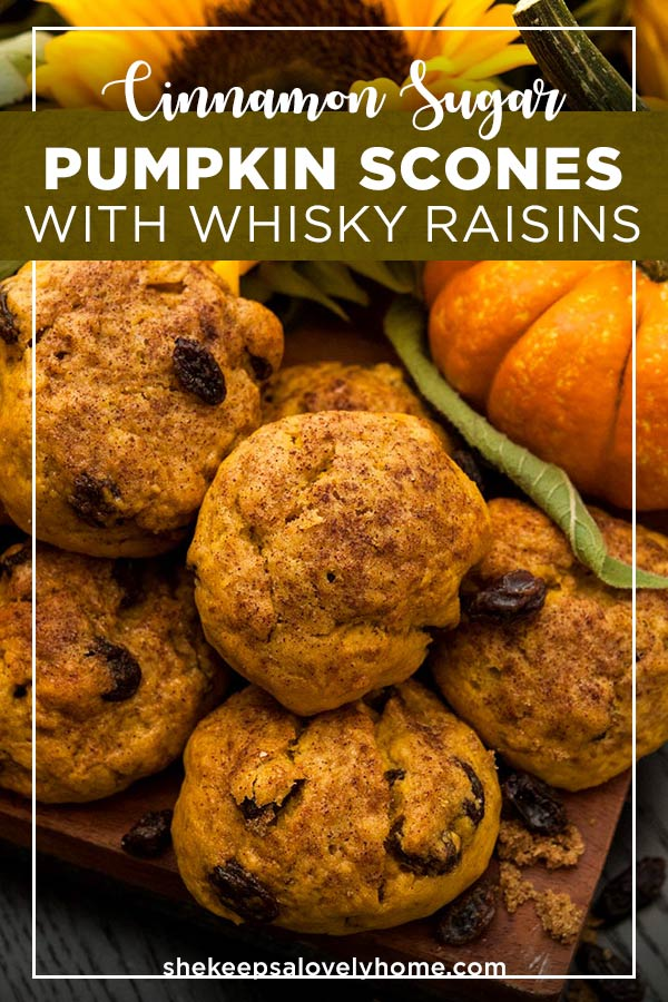 These pumpkin scones with cinnamon sugar and whisky-soaked raisins are the most perfect, crispy Autumn morning pastry! Serve them with hot apple cider, or your favorite Autumn tea! #pumpkinrecipes, #Halloween, #thanksgiving, #halloweenrecipe, #autumreacipes, #thanksgivingrecipes, #scones, #tea, #autumn, #shekeepsalovelyhome