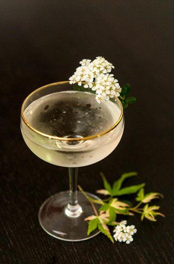 A coup glass cocktail garnished with white flowers on a black table, sprinkled with small green leaves.