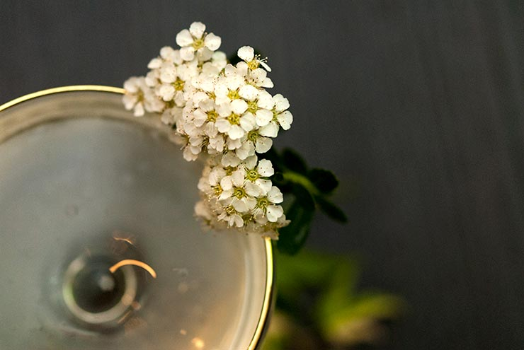 A closeup of a white flower garnish on a gold-rimmed cocktail glass.