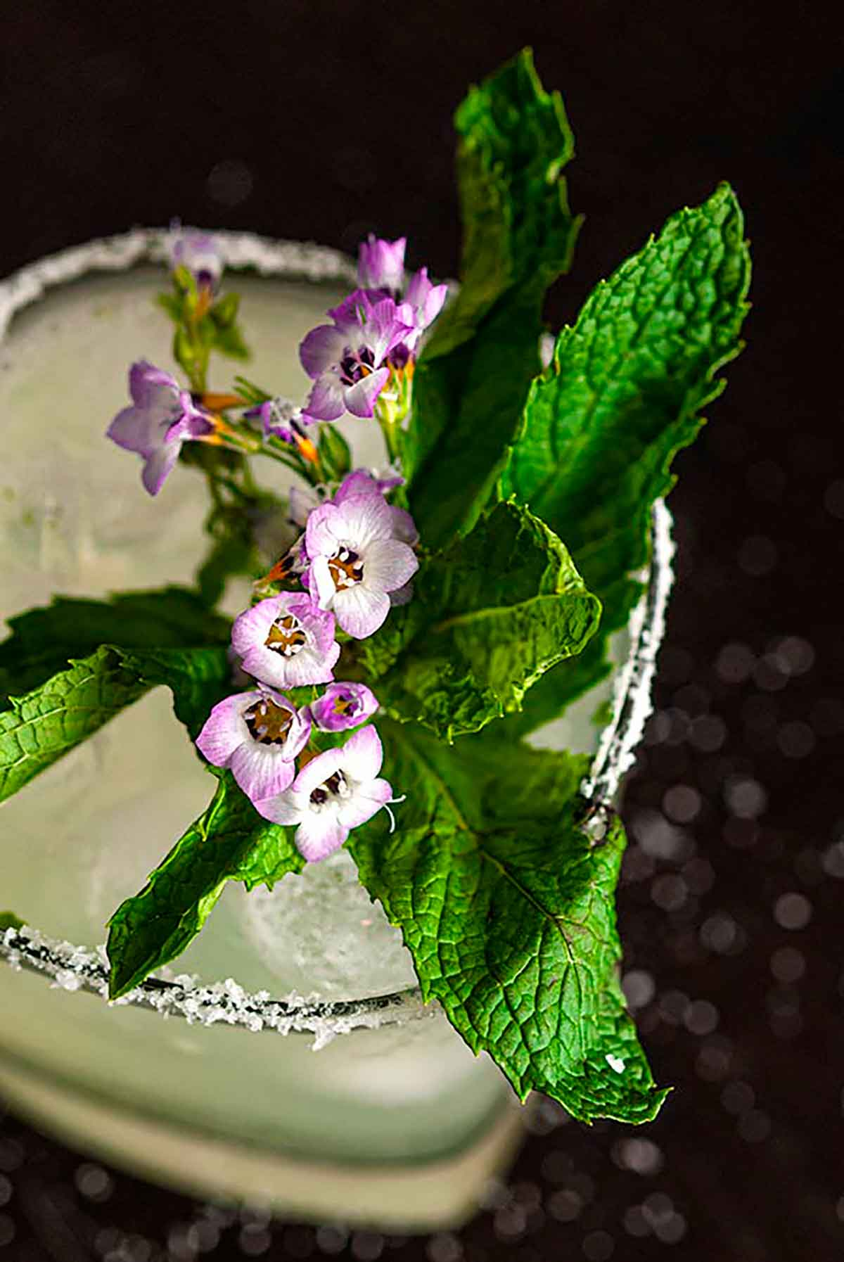 A closeup of a mint and flower garnish on a salted-rim margarita cocktail.