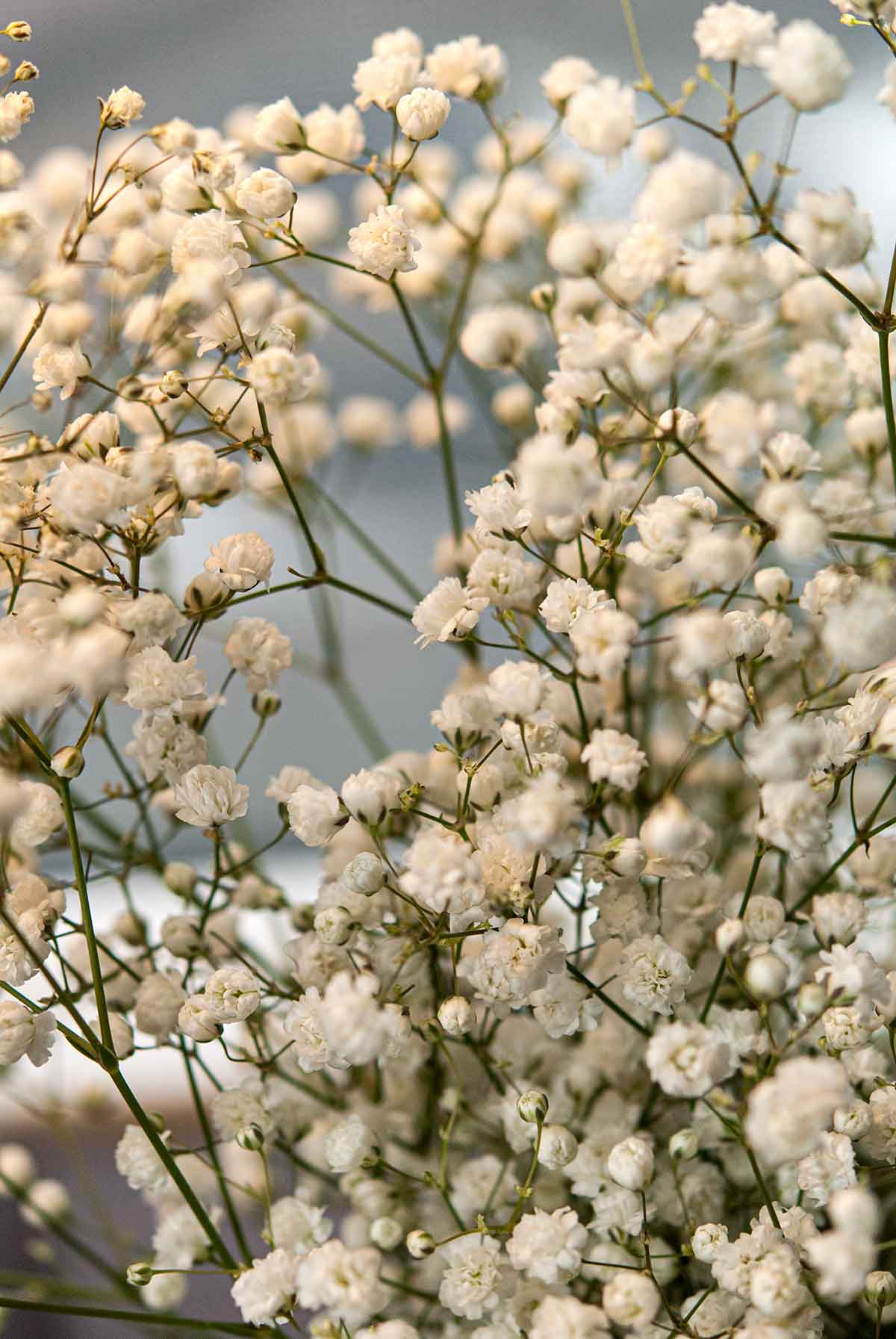 Baby's Breath flowers.