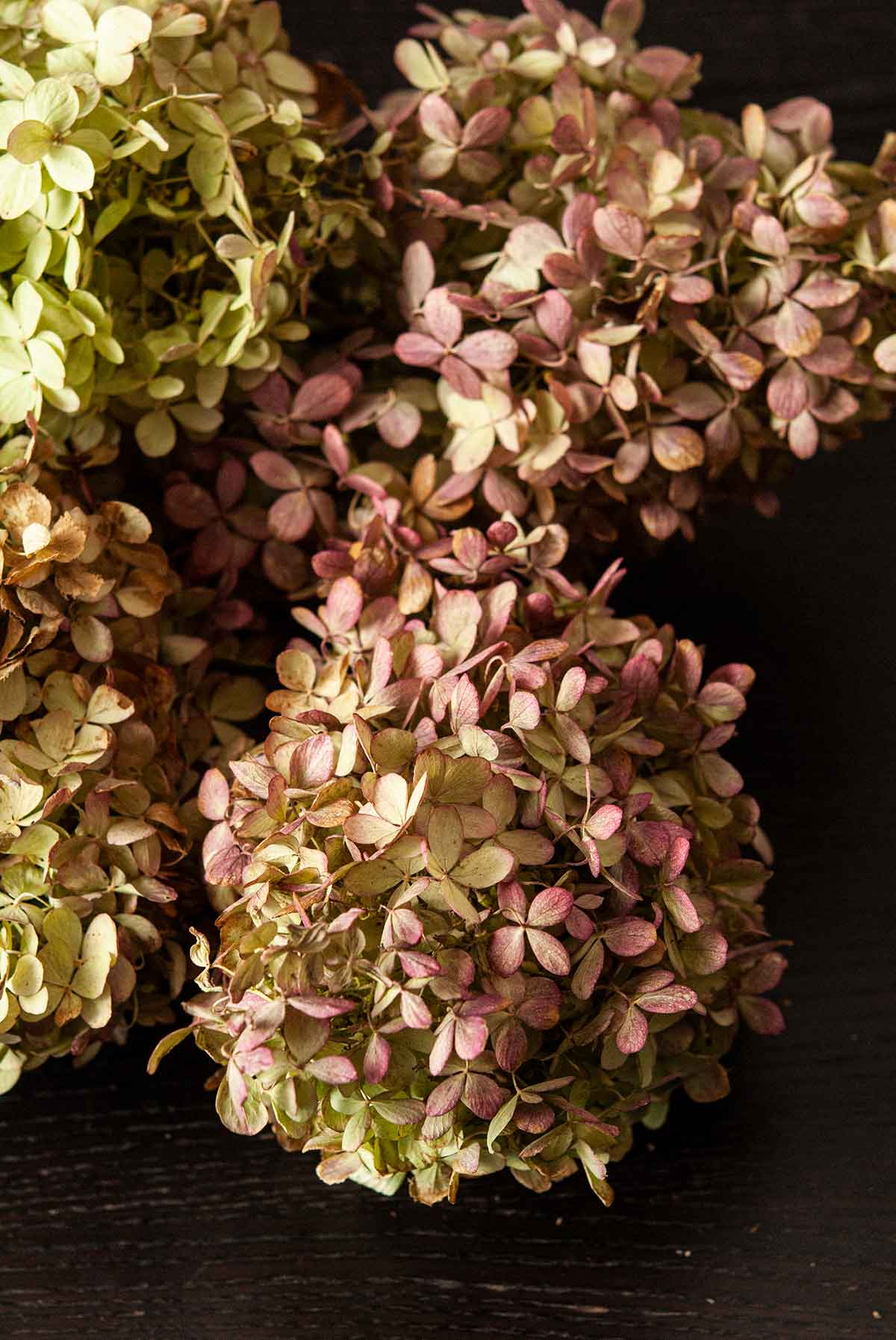 Hydrangea flowers on a table.