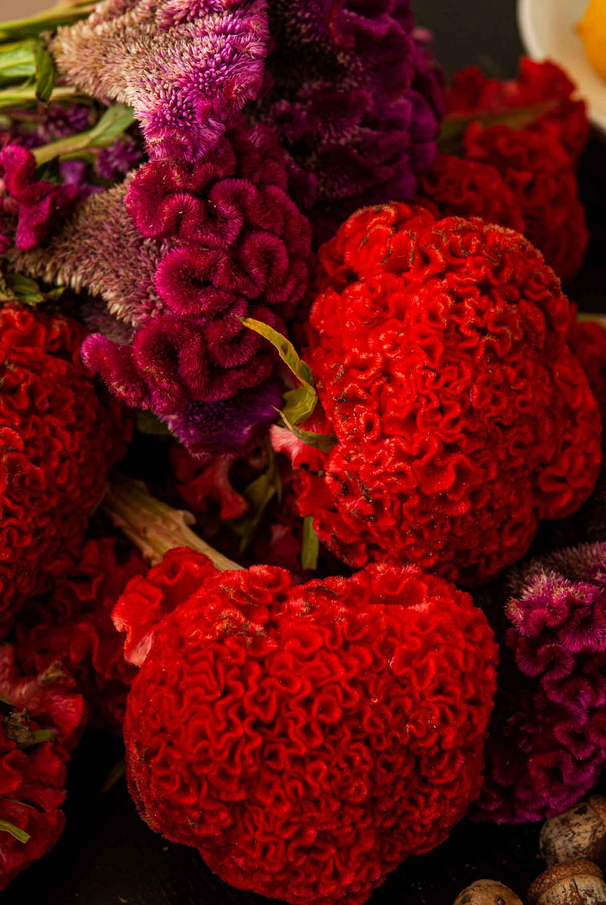 Bright Cockscomb flowers.