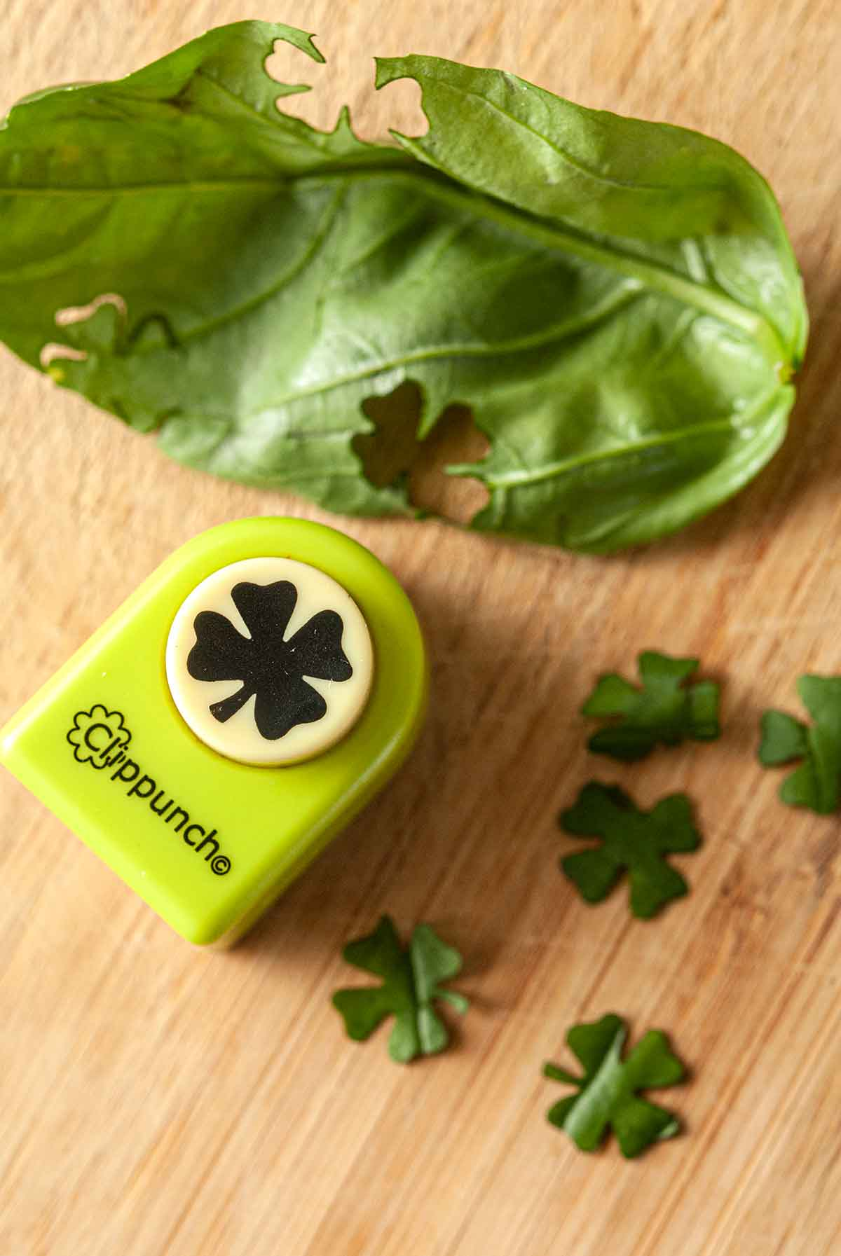 A clover paper punch on a cutting board beside a basil leaf and punched clovers.