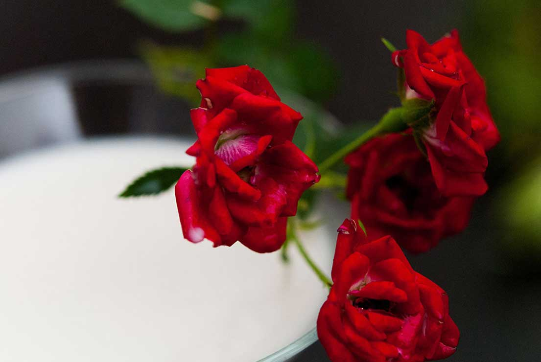 A closeup of small roses on the edge of a martini glass.